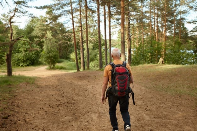 rear view unrecognizable elderly man pensioner carrying backpack walking along path while hiking forest sunny autumn day people age activity leisure recreation travelc oncept 343059 1